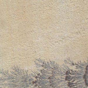 Fossil Stone Sandstone